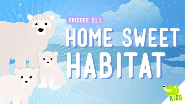 How would a Polar Bear do if you put it in the desert? Not well. But why? Why can't anything live anywhere? Well, this has to do with Habitats and how animal...