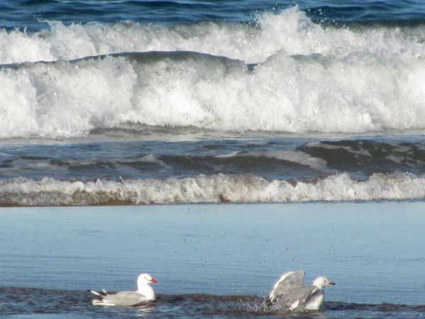@BundyJacs What a nice day to be a #seagull at the #beach  #Bargara