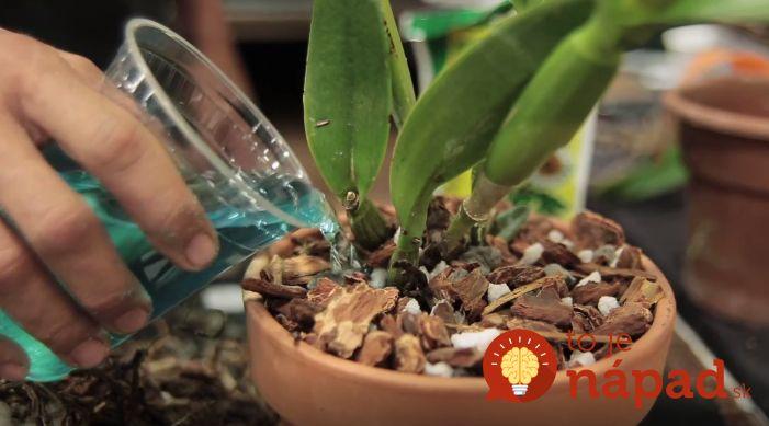 Moja žena týmto zázrakom hnojí orchidei a má ich nádherné, žiadna pleseň, ani škodcovia nehrozia.