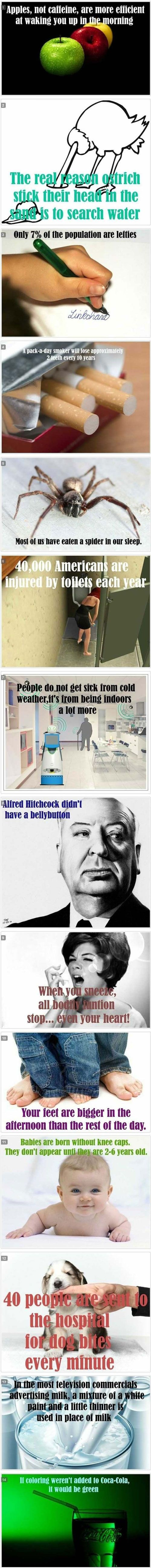 correction: Alfred Hitchcock surgically removed his belly button just to be different.
