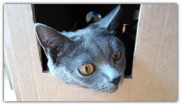 Cat's Taste: Der kleinste Katzenspielplatz der Welt