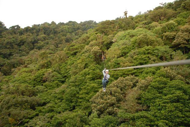 有效利用間伐才的設施!日本最大的冒險森林「Tree Picnic Adventure IKEDA」將在福井縣池田町於2016年春季開幕! | colocal –…