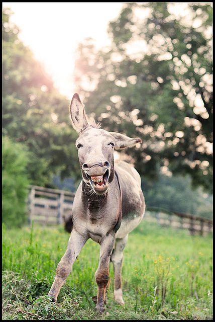 Jolly donkey