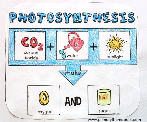 25+ best ideas about Photosynthesis activities on Pinterest ...