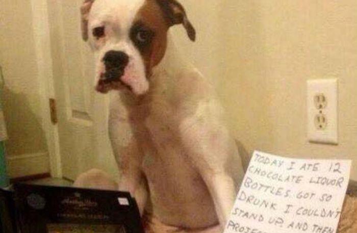 Deze schuldige hondjes schamen zich dood voor hun daden