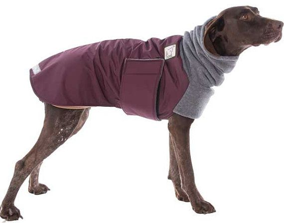 GERMAN SHORTHAIRED POINTER  Winter Dog Coat by VoyagersK9Apparel