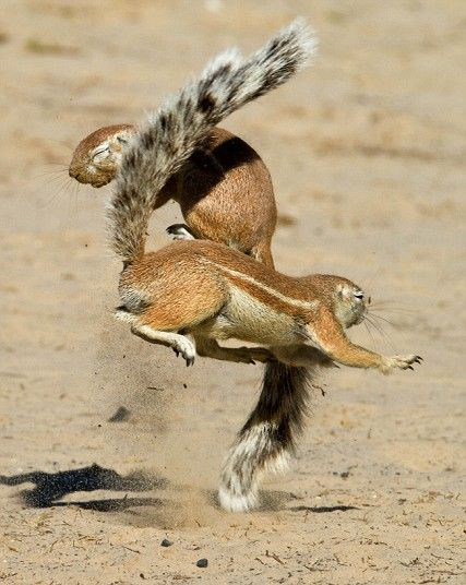 Animals Fighting For Food 17 Best images about r...