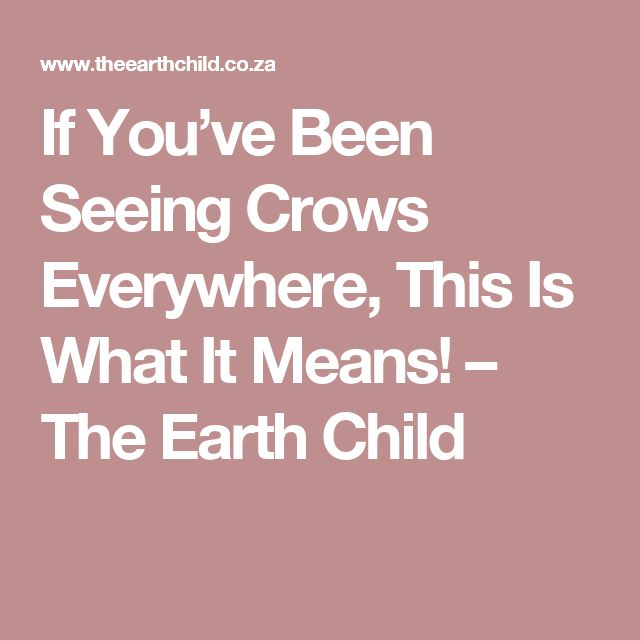 If You've Been Seeing Crows Everywhere, This Is What It Means! – The Earth Child