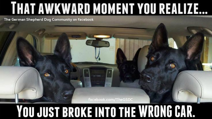 Don't you just LOVE GSD security systems? ;)     A huge thanks to the facebook page Crooked Creek Ranch for posting this awesome photo of three of their dogs...that's Maverick, Cassie and Jackson in the pic, taken by owner Chris Ludlum! :)