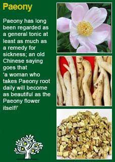 Richard Whelan ~ Medical Herbalist ~ Paeony