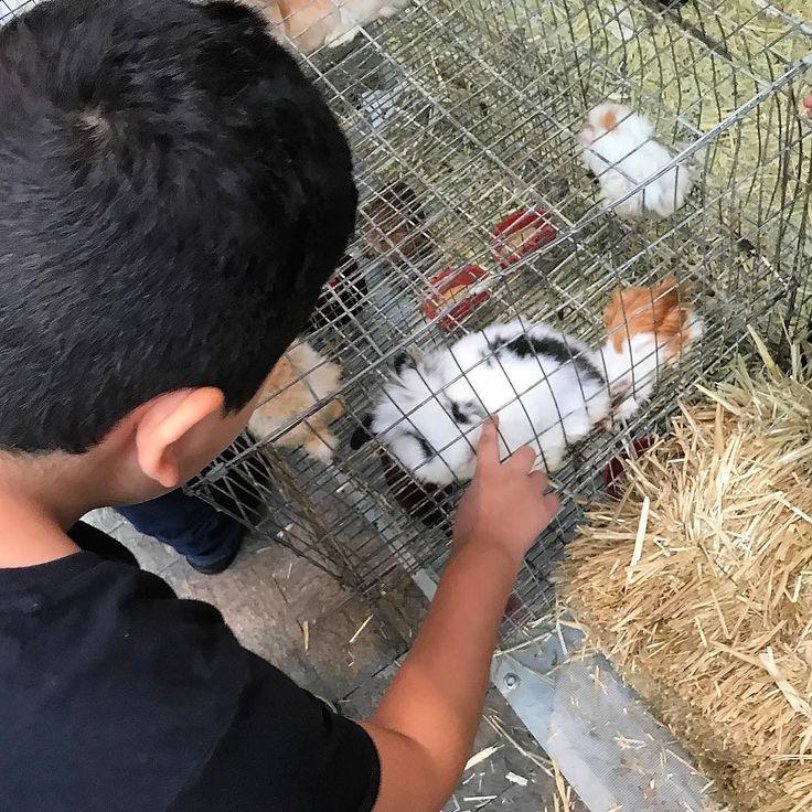 Conejos y hámsteres.