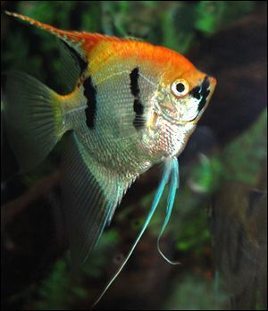25 best ideas about cute fish on pinterest pretty fish for Cute names for fish