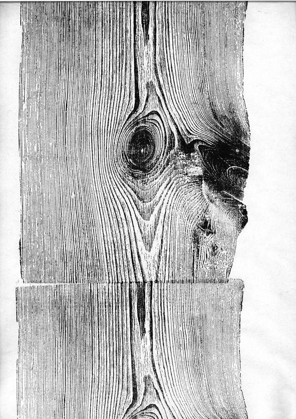 I've been obsessed with wood grain lately. It's so fascinating