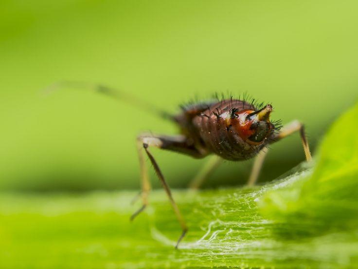 Die besten 25+ Was hilft gegen läuse Ideen auf Pinterest Mittel - was hilft gegen ameisen in der k che