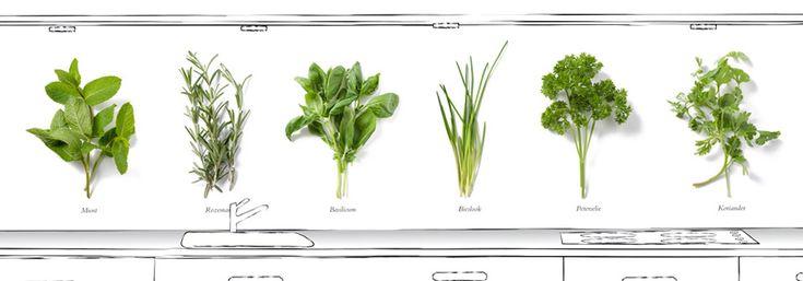 Green Flavour, prachtige beelden van verse kruiden voor op de achterwand in de keuken!