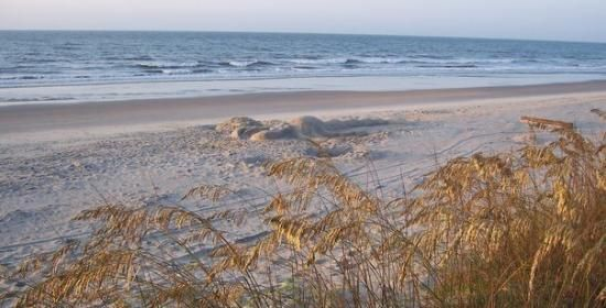 Sea Oats and the Atlantic Ocean Pawleys Island SC