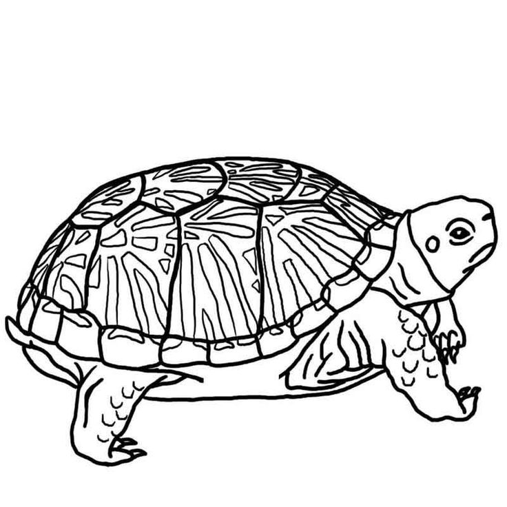 Turtle Coloring Pages Printable from Animals Coloring