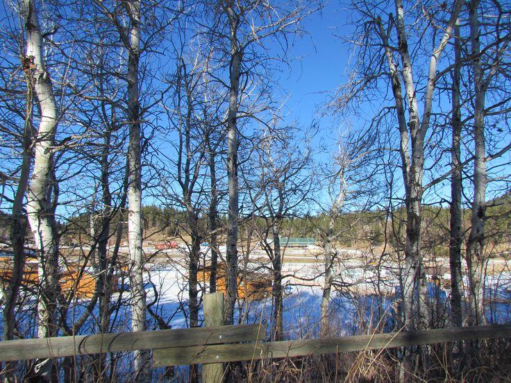 Pretty view thru the trees!