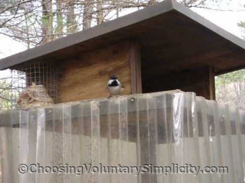 A Squirrel Proof Bird Feeder That Really Is - http://www.choosingvoluntarysimplicity.com/proven-squirrel-proof-bird-feeder/