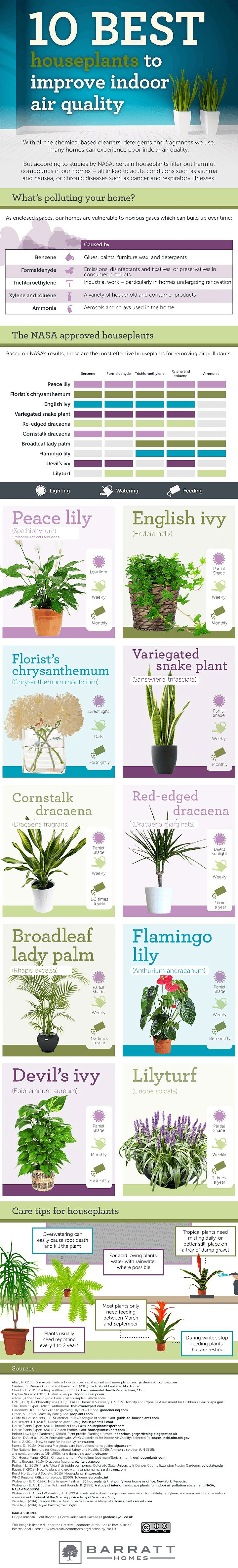 More than just lovely to look at, these 10 house plants may even improve your health!