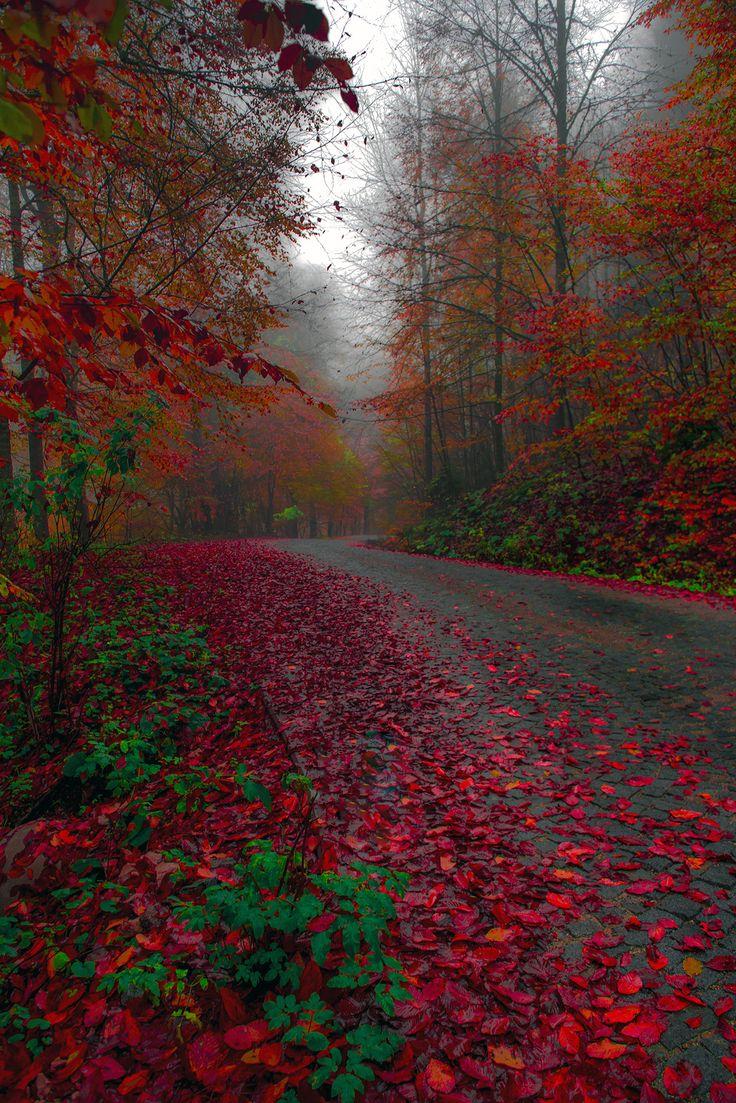 ~~The road between dream and life   autumn, Bolu, Turkey   by Zeki Seferoglu~~