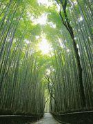 竹林の小径の画像