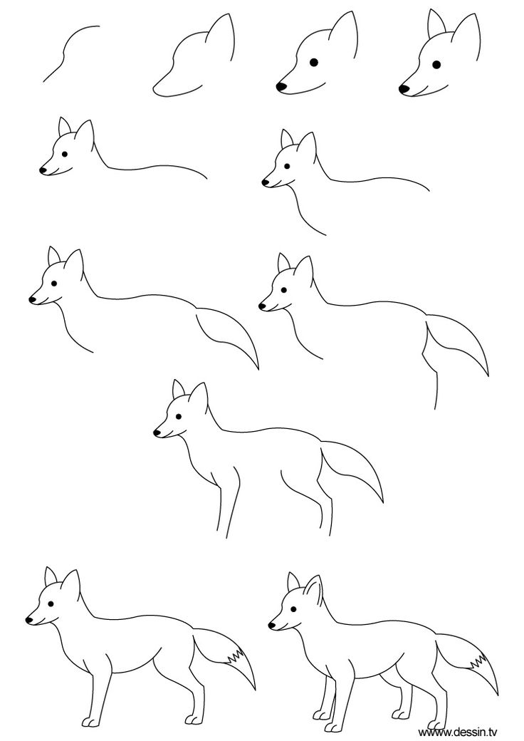 How To Draw Step By Step | learn how to draw a fox with ...