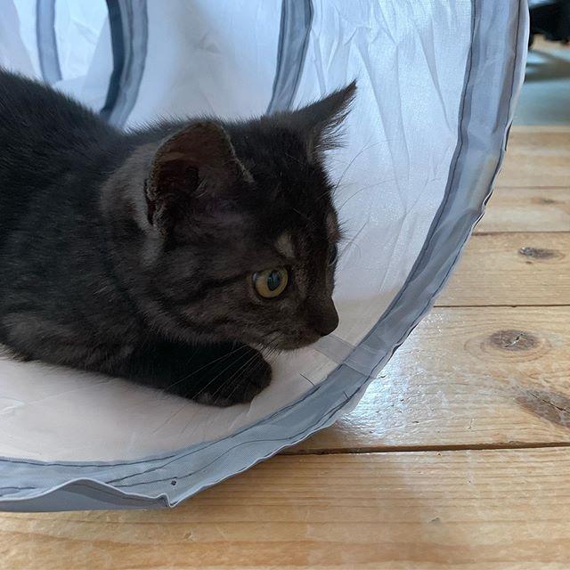 Evi Hat Eine Grosse Bitte An Euch Heute Hat Die Black Friday Woche Bei Amazon Begonnen Wie Ihr Vielleicht Wisst Sind Wir Amazon Par Cute Animals Animals Cats