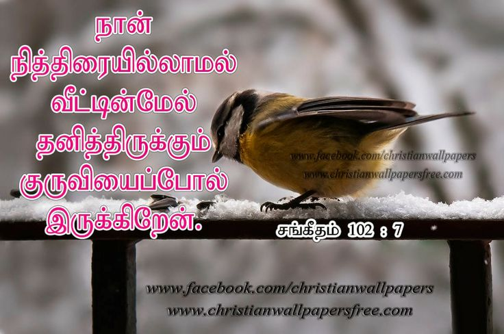 Best 25 Bible Verses About Christmas Ideas On Pinterest: Best 25+ Tamil Bible Ideas On Pinterest