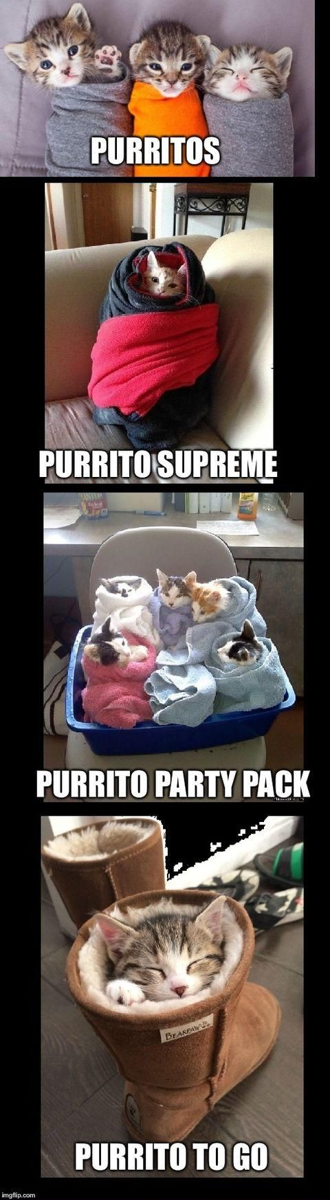 619 points • 278 comments - The purrito. - IWSMT has amazing images, videos and anectodes to waste your time on