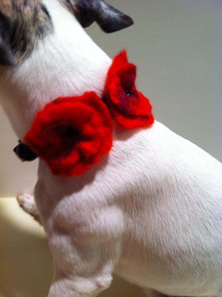 85 Best Fur Baby Frou Frou Images On Pinterest Pets Dog