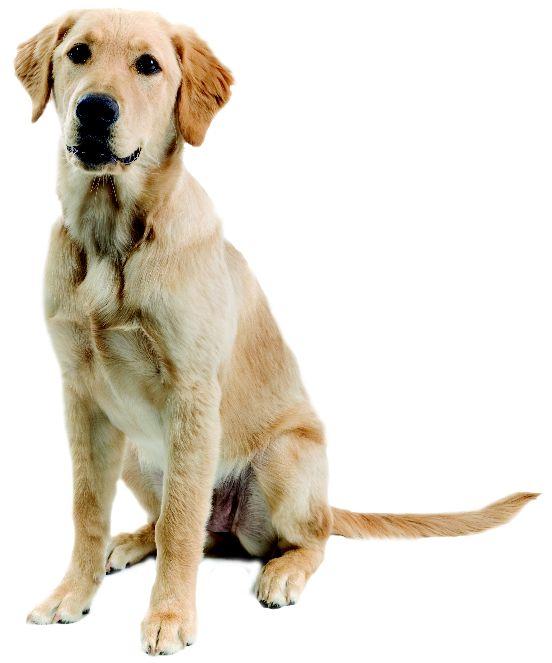Dog png images