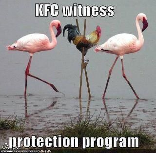he he heKfc Witness, Protective Programs, Funny Pictures, Too Funny, Funny Stuff, Humor, Flamingos, Funny Animal, Witness Protective