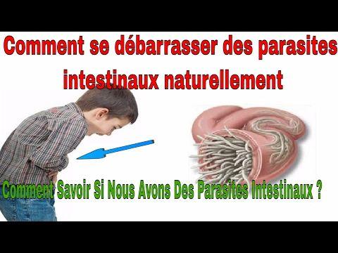 Le nettoyage de lorganisme des parasites par lurine