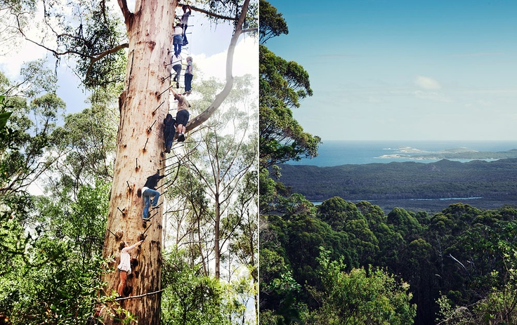 From our trip to Western Australia. Climbing high trees...