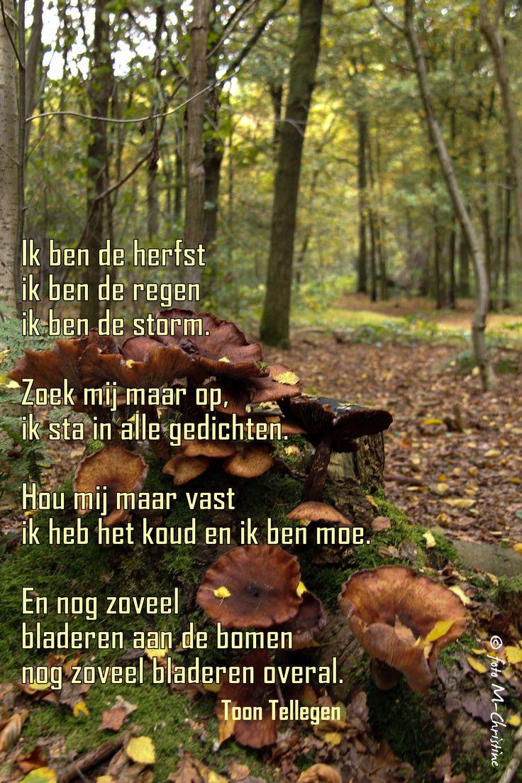 Citaten Herfst Pool : Ik ben de herfst gedichten gezegden en citaten