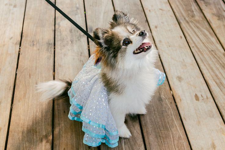 Halloween is around the corner! #marthastewartpetsAbbie Items, Beautiful Animal, Dogs Projects, Dogs Costumes, Dog Halloween Costumes, Dogs Halloween Costumes, Box, Awww Adorable, Baby Abbie