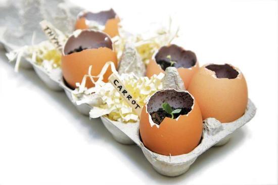eggshell starter pots: Ideas, Shells, Indoor Herbs, Growing Herbs, Mothers Earth News, Seeds Starters, Herbs Gardens, Eggshell, Dreams Gardens