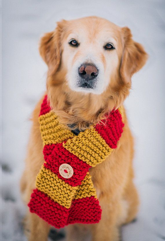 Dog Clothes Dog Scarf In Gryffindor House Colors Knit For