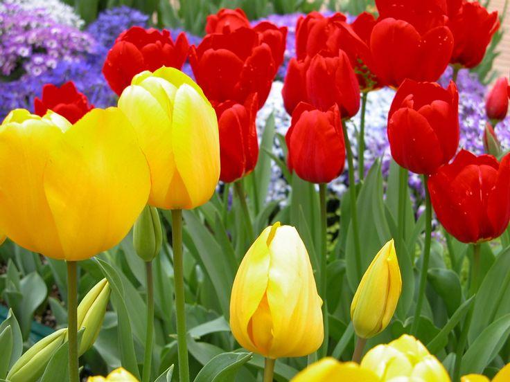 チューリップ全般の花言葉は、「思いやり」で、赤いチューリップは「愛の告白」で、黄色いチューリップは「望みのない恋」または「名声」で、白いチューリップは「失われた愛」で、紫のチューリップは「不滅の愛」で、ピンクのチューリップは「愛の芽生え」と「誠実な愛」です。 @Taidobuy#taidobuy#ファション#デザイン#可愛い#きれい#お洒落#いいね#シック#レディース#メンズ服#靴#ドレス#ワンピース#下着&水着#トップス#バッグ#アウター#ボトムス#スカート#アクセサリー#ウエディング