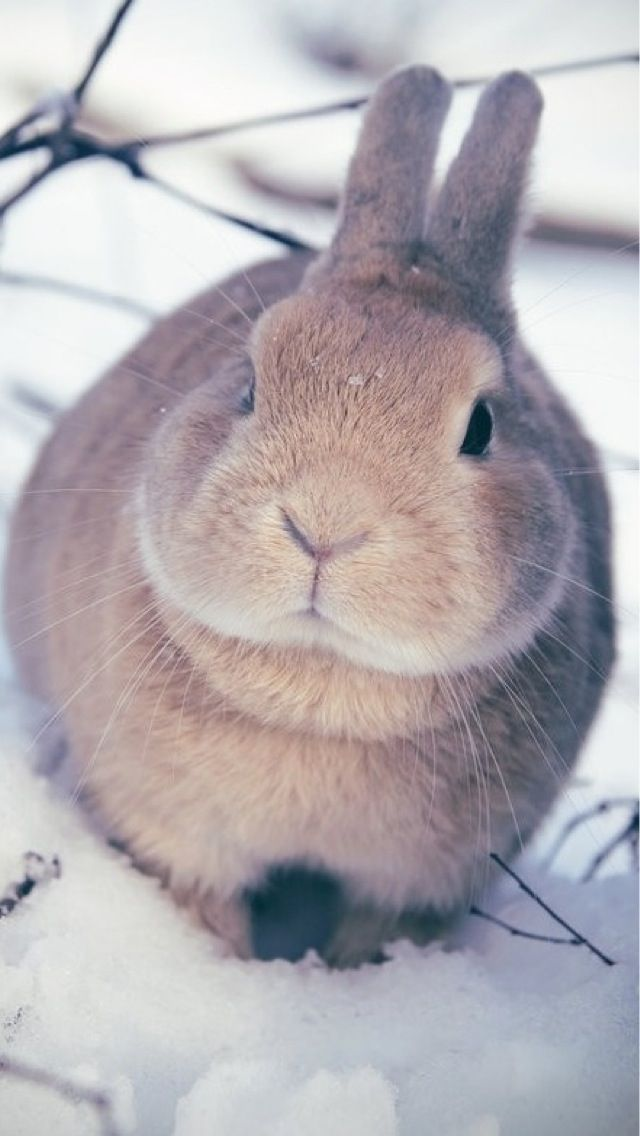 Pictures Of Fat Bunnies 62