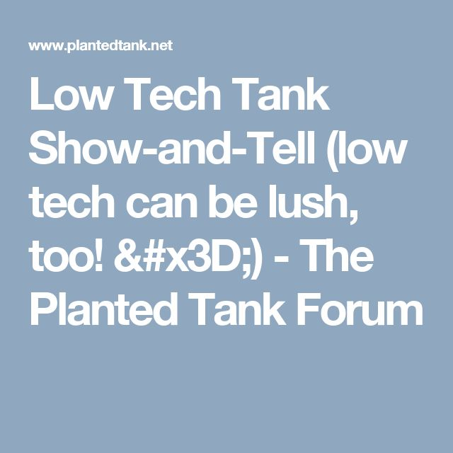 Low Tech Tank Show-and-Tell (low tech can be lush, too! =) - The Planted Tank Forum