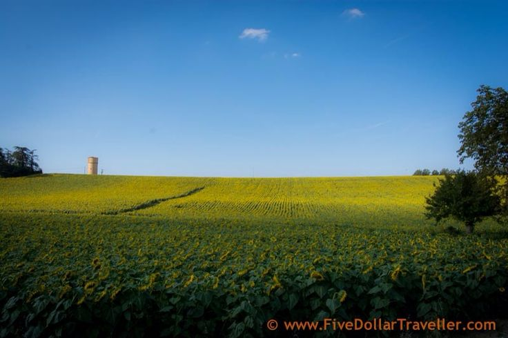 Castelnaudary, Castelnaudary, France - The fields surrounding Castelnaudary  are filled with sunflowers - as far as the eye can see.