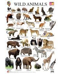 list of sea animals - Google Search