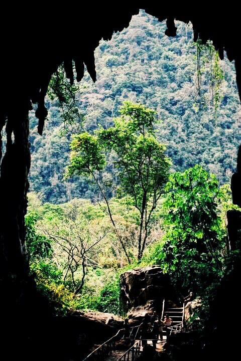 Selva, Peru
