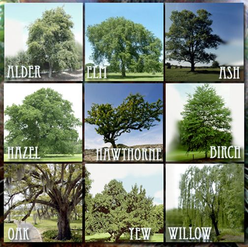 One Tradition's Nine Sacred Woods, the old Scottish rhyme this list is based on and the magickal  properties of the trees 9 sacred woods ⓽ | Flickr - Photo Sharing!