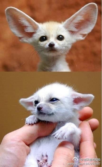 Baby fox!  #hahahaha8888