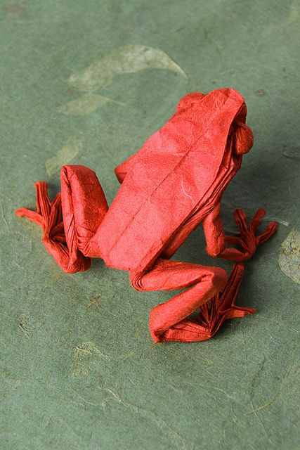 red poison dart frog by nyanko sensei, via Flickr