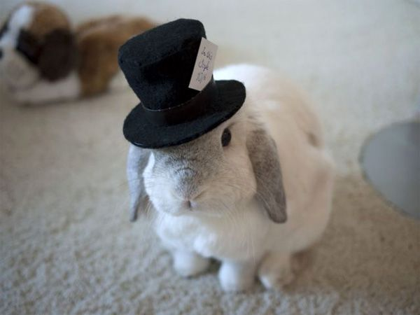 Fancy bunny for @MyBeautyBunny JenLike A Sir, Mad Hatters, Alice In Wonderland, Wedding Photos, Top Hats, Bunnies, White Rabbit, Animal, Tops Hats