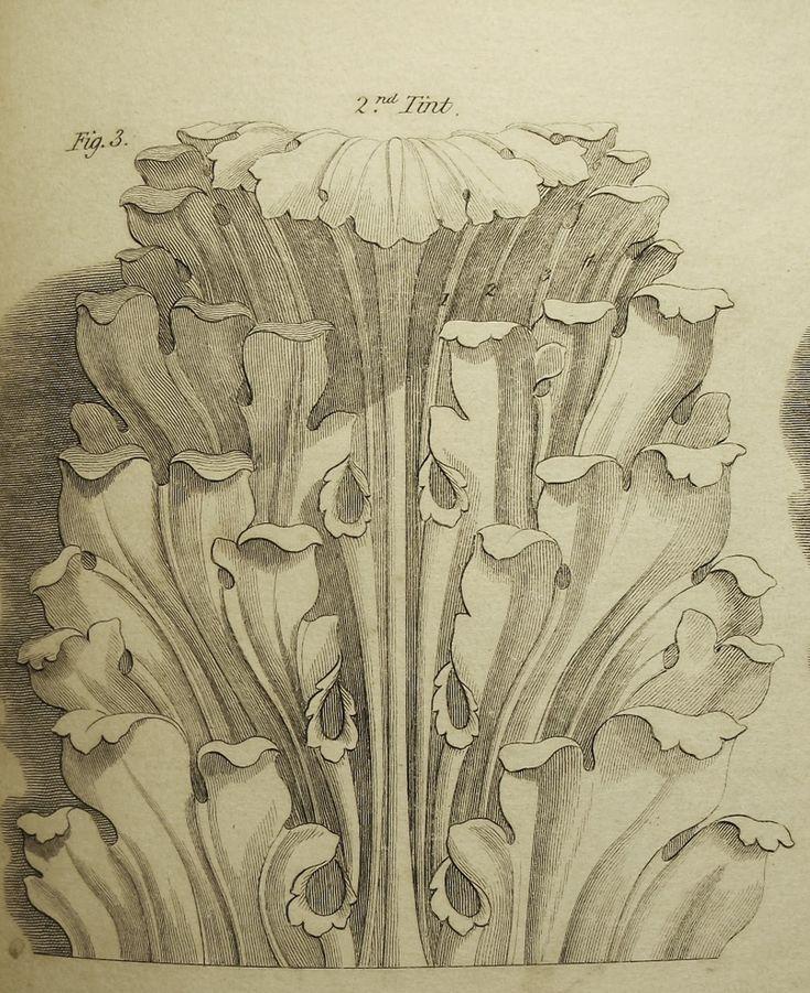 Acanthus Leaf Ornament Sketch Vintage Illustration
